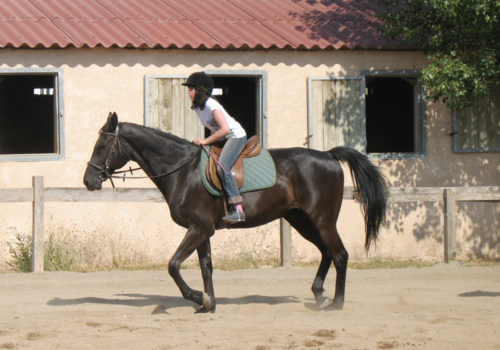stage equitation fille a cheval