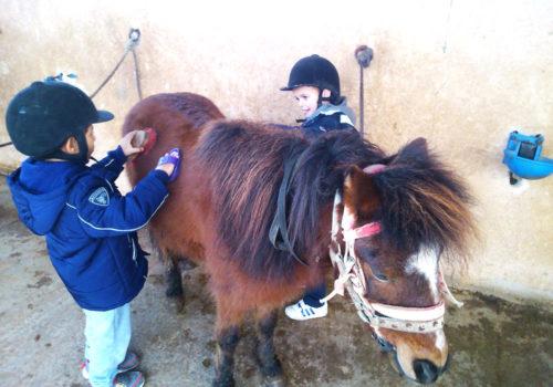 stage equitation enfants donnant les soins aux poneys