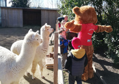 stage activites nature avec lamas alpaga